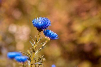 Saksı Çiçeklerinin Sineklenmesini Önleme