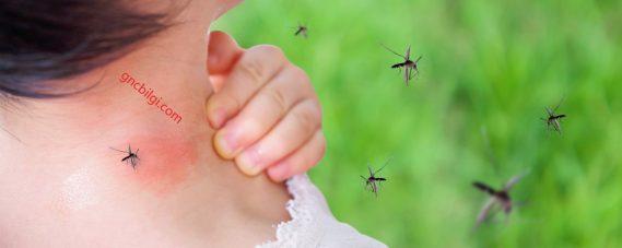 Sivrisineklerden Kurtulmak İcin Müthis Cözümler